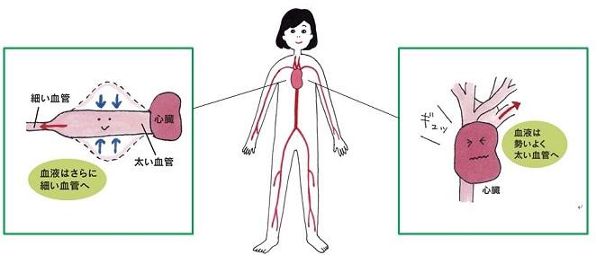 血圧の「上」と「下」にはそれぞれ意味がある!