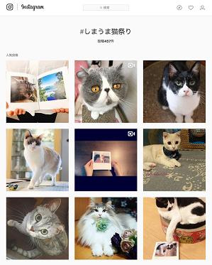 Instagram #しまうま猫祭り もチェック!