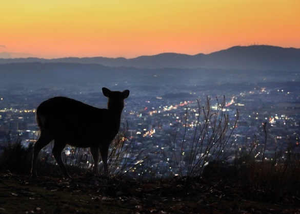 夕暮れの若草山からみた奈良のまちなみ 司馬遼太郎の言葉2「この国のかたち」より (c)小林修(朝日新聞出版写真部)
