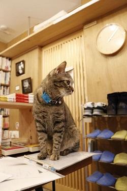 取材のお手伝い(?)をしてくれた猫店員の読太さん