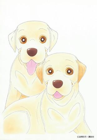 盲導犬も2代目・ティンクルが活躍中!1代目・ハッピーはリタイアして悠々自適の生活に♪